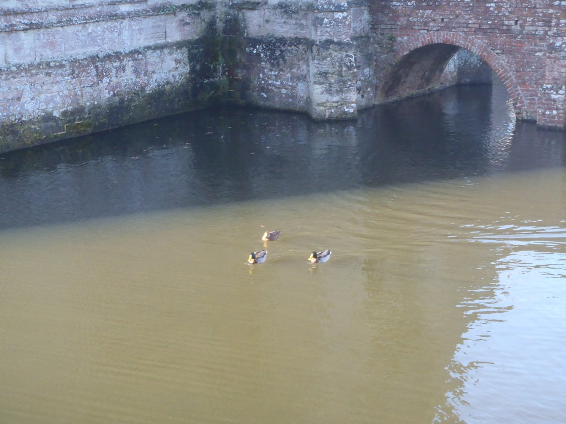 Ducks happily swimming in the moat
