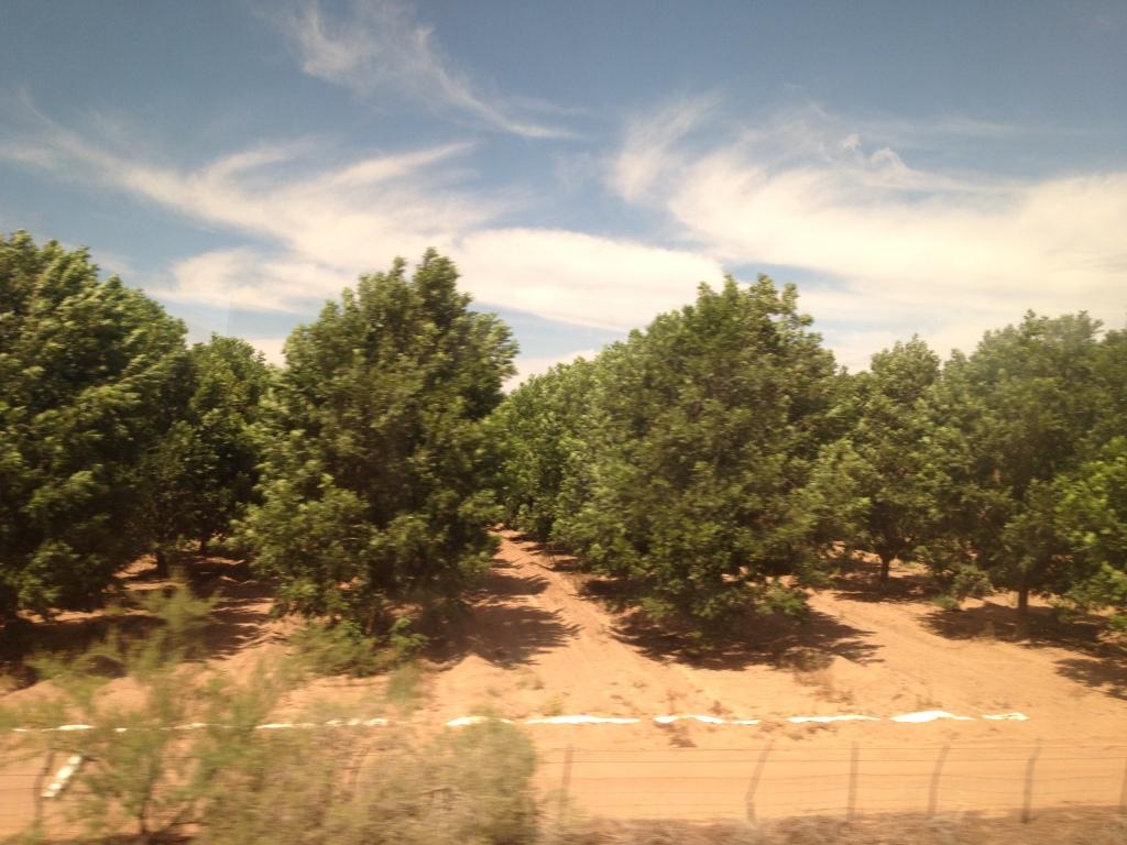 IMG_0735 pecan groves