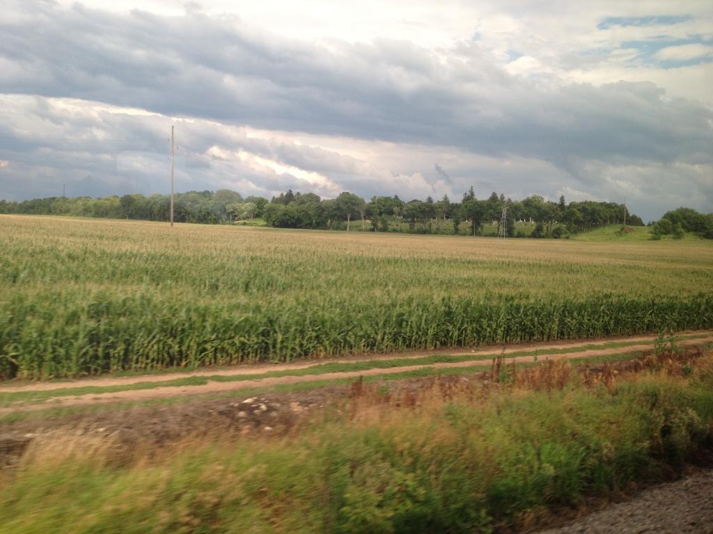 More cornfields
