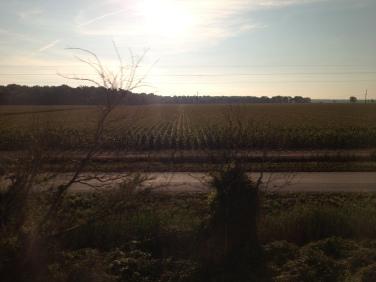 IMG_2044 corn field