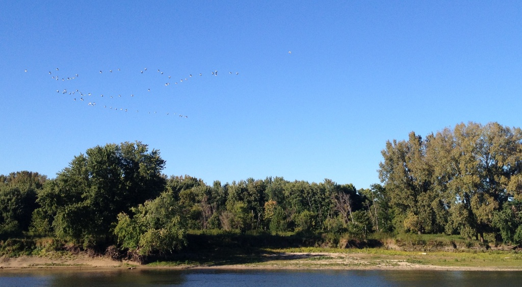 geese over river