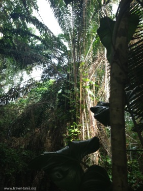 biosphere rainforest 2