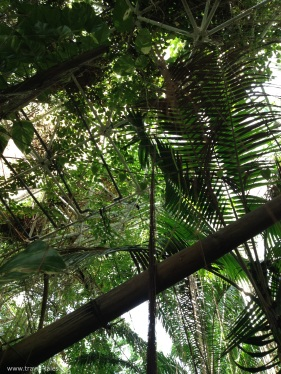 biosphere rainforest 4