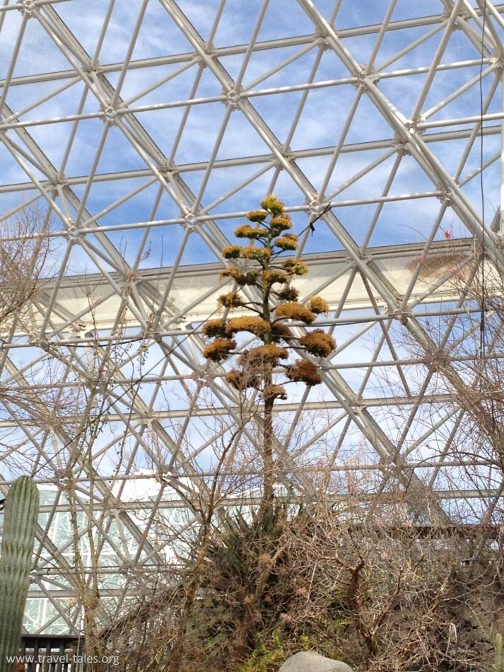biosphere desert 2