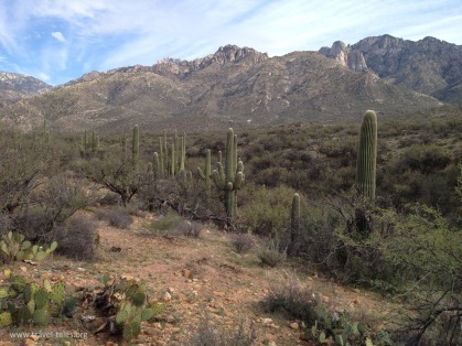 state park row of cacti