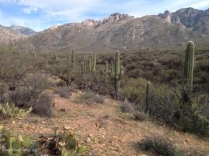 state park cactus row
