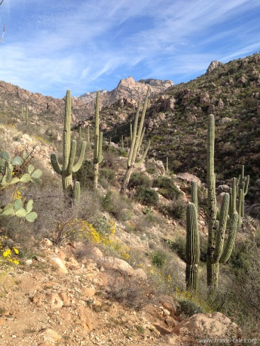 state park cactus valley