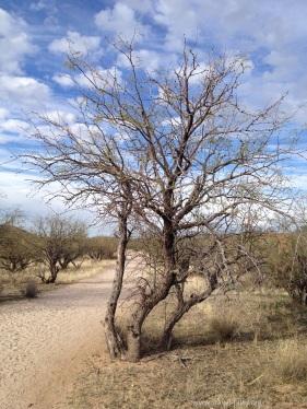 state park shrub