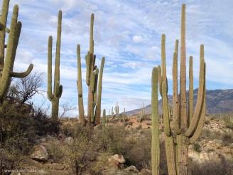 state park cacti