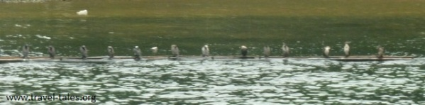 animals Guilin 52 cropped Li river cruise 21