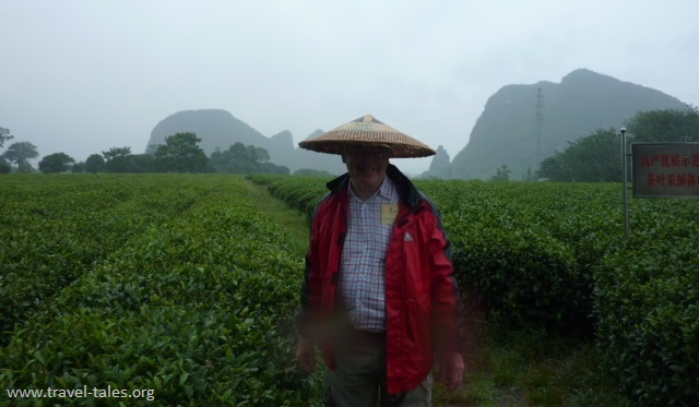 Guilin 17 tea plantation