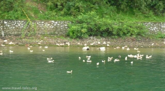 riverbanks Guilin 75 cropped Li river cruise 44
