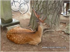 18-deer